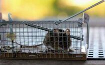 Мыши и крысы в доме или квартире — как их уничтожить