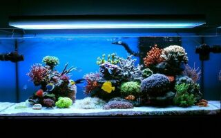 Коралловый риф в аквариуме: красота цветов