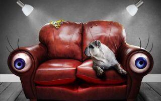 Как купить хороший диван? (ВИДЕО)