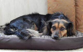 Лучшее жилье для вашего питомца: мы ищем место для собаки, кошки, рыбы и других домашних животных