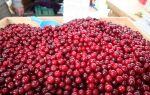 Почему стоит есть вишни? Достижение вишни для здоровья и красоты