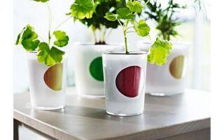 Растительный ирригационный горшок: не только для отдыхающих