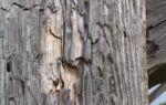 Коррозия строительной древесины