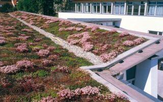 Сад на крыше, т. Е. Мы ставим зеленую крышу
