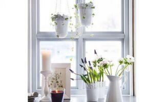 Цветы как весенние камыши (фотографии)